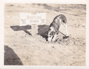 85th-FS-dog-digging-for-mines.-Robert-Kelley-collection-via-Peter-Kelley